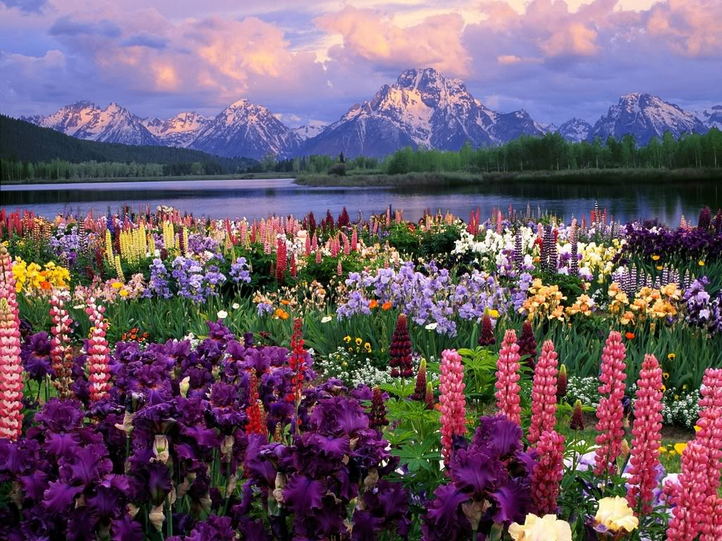 Beautiful Mountains and Flowers